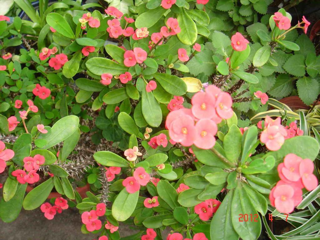 【爱在春天里】春天里叮咚家的小花园(原创)